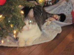 Reggie at Christmas 002